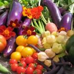 Activité Cuisinez au jardin Dijon
