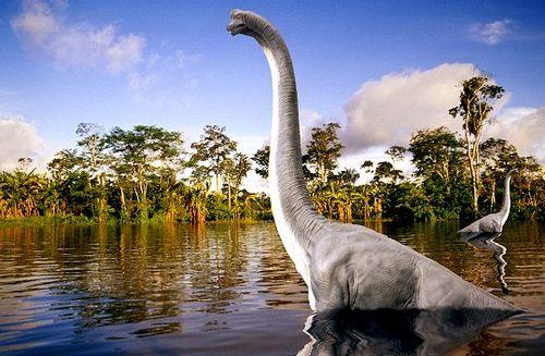 Activité Dijon : L'extinction des espèces