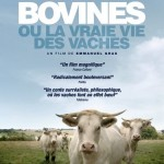 Cinma Dijon : Bovines