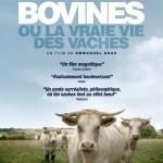 Dijon Cinéma Bovines