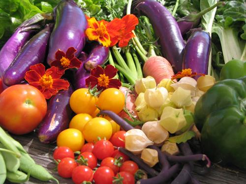 Activité Dijon : Cuisinez au jardin !